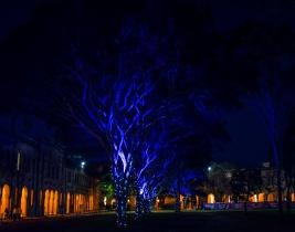 event-garden-lighting-2